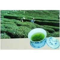 Buy cheap Standard Extracts Pu Erh Tea P.E. from wholesalers