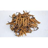Buy cheap Standard Extracts Cordyceps Sinensis P.E from wholesalers