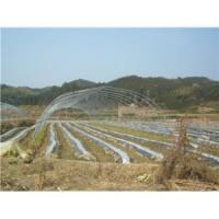 Buy cheap Galvanized Polytunnels Plastic Greenhouses from wholesalers