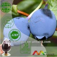Natural Blueberry Extract