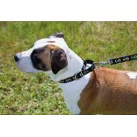 Buy cheap 1 inch Combo (Martingale) Collar for Larger Breeds from wholesalers