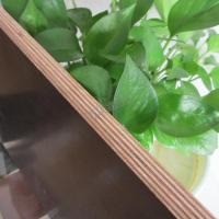 Hardwood Core Brown Film Faced Plywood