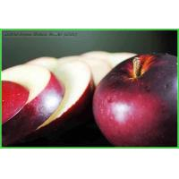 Buy cheap Apple Series Apple Powder from wholesalers