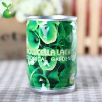 Buy cheap Flowers&Grass Moluccella Laevis/Shell Flower/Flower In Can/Office Mini Plants/DIY Planting product