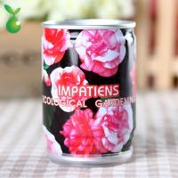 Buy cheap Flowers&Grass Impatiens/Tin Can Plant/Tin Plants/Competitive Price product