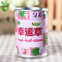 Spring&Autumn Four-Leaf-Clover/Lucky Clover/Canned Plant/Tin Plants/Best Selling