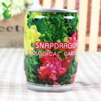 Flowers&Grass Snapdragon/Canned Plant/Office Mini Plants/2013 New Style