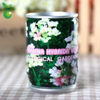 Buy cheap Flowers&Grass Verbena Hybrida Voss/Tin Can Flower/Mini Garden Canned Plants/Easy Planting product