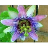 Buy cheap Passion Flower Extract Passion Flower Extract from wholesalers