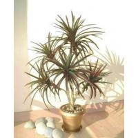 Buy cheap Large Trees 3 ft Yucca (D) from wholesalers