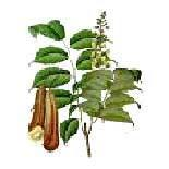 Buy cheap Balsam Peru Oil from wholesalers