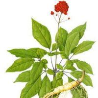 Buy cheap Siberian Ginseng Extract product