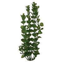 Buy cheap Water Wonders 6 Moneywort Plant from wholesalers