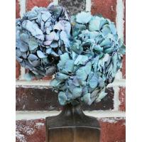 Buy cheap Dried Hydrangea Flower Bunch - Blue Color product