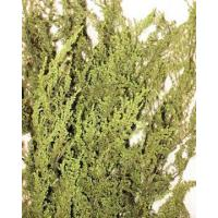 Buy cheap Preserved Sweet Annie Flower Bunch from wholesalers