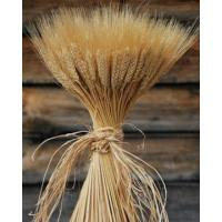 Buy cheap Large Dried Wheat Bundle - 1LB from wholesalers