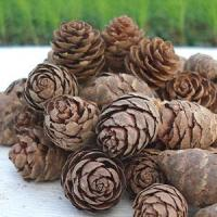 Buy cheap Peru Balsam Oil from wholesalers