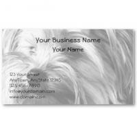 Buy cheap Black And White Yorkshire Terrier Yorkie Portrait from wholesalers