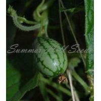 Buy cheap Melothria scabra from wholesalers