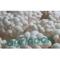 Buy cheap Fresh White Beech Mushroom product