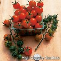 Buy cheap Hybrid Sun Gold Cherry Tomato from wholesalers