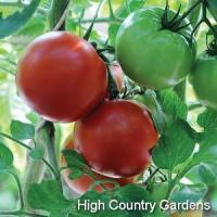 Buy cheap Hybrid Big Beef Tomato from wholesalers