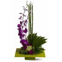 Buy cheap Zen Artistry- Flowers Congratulations from wholesalers