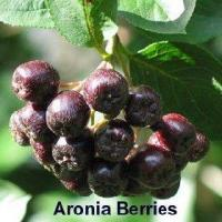Buy cheap Herbal Extracts Aronia chokeberry Extract(Aronia melanocarpa extract) from wholesalers