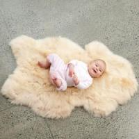 Buy cheap Sheepskin Rugs from wholesalers