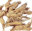 Buy cheap Angelica Extract from wholesalers