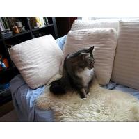 Buy cheap How to Clean a Sheepskin Rug from wholesalers