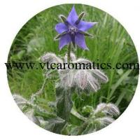 Buy cheap Borage oil from wholesalers
