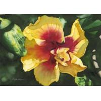 Buy cheap Hibiscus II - Notecard 6 Pack from wholesalers