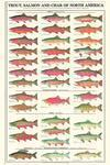 Buy cheap Fish Posters& Prints product