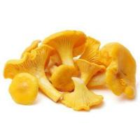 Buy cheap Chanterelle P.E., Chanterelle Extract from wholesalers