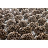 Buy cheap Standard Extracts Maitake Mushroom Extract from wholesalers