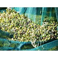 Buy cheap Hot selling HDPE Olive Net Harvest Net from wholesalers