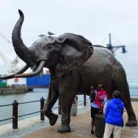 Buy cheap Bronze metal outdoor statue big elephant sculpture for sale from wholesalers