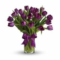 Buy cheap Purple Tulips product