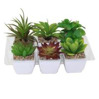Buy cheap Artifical Plant product