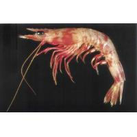 Buy cheap Frozen Squid Fire Shrimp from wholesalers