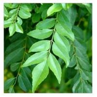Buy cheap Curry Leaves from wholesalers