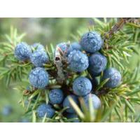 Buy cheap Aromatic waters Juniper berry essential water from wholesalers