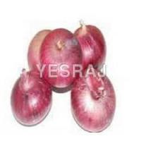 Buy cheap onion from wholesalers