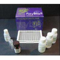 Buy cheap biological and chemical 2B4/CD244/SLAMF from wholesalers