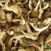 Buy cheap Dried Oyster Mushroom product