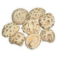 Buy cheap Mushroom LOG BAIHUA MUSHROOM from wholesalers