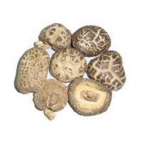 Buy cheap Mushroom LOG CHAHUA MUSHROOM from wholesalers