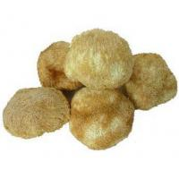 Buy cheap Wild Edible HERICIUM from wholesalers