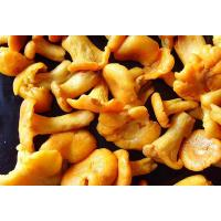 Buy cheap Brined Cantharellus Cibarius from wholesalers